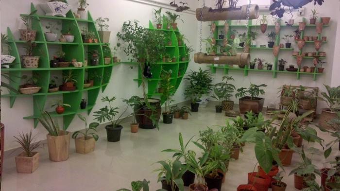 комнатные растения как бизнес