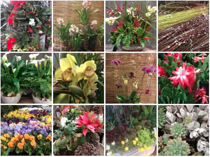 бизнес на комнатных растениях