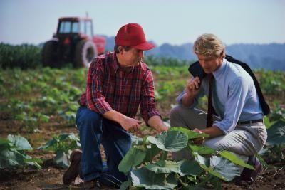идеи агробизнеса