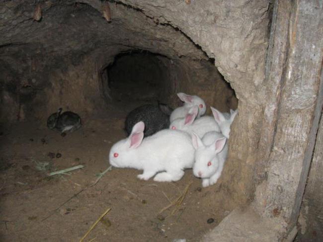 разведение кроликов в ямах как бизнес