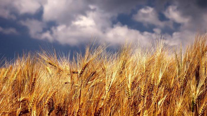 Выращиваемые сельскохозяйственные культуры россии