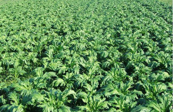 основные сельскохозяйственные культуры