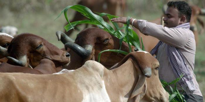 создание фермерского хозяйства