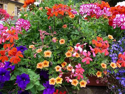 выращивание цветов на продажу в теплице