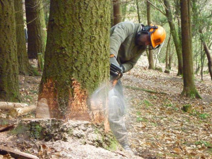 куда жаловаться на вырубку деревьев