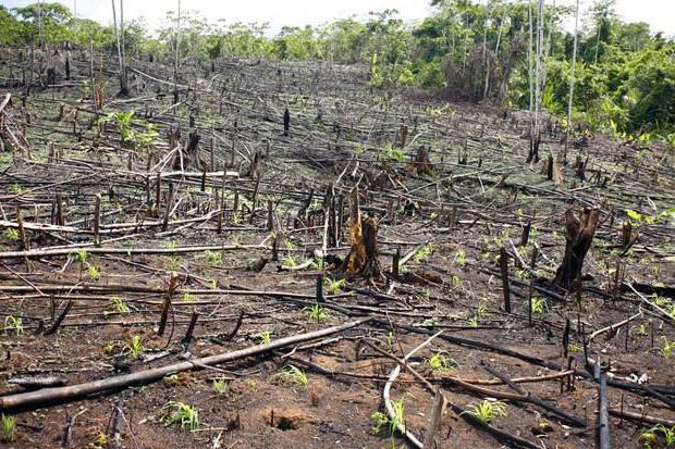 жаловаться на вырубку деревьев