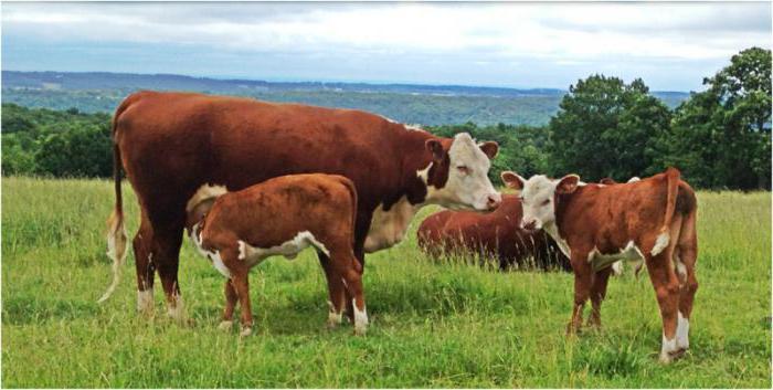 Продуктивные животные - это что значит? Виды продуктивных животных
