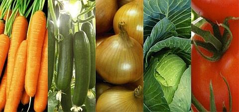 Бизнес на семенах