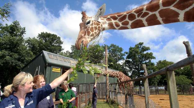 Как открыть контактный зоопарк? Где купить животных для мини-зоопарка? Необходимые документы и расчет затрат