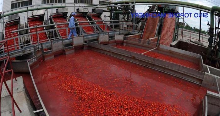 Выгодный бизнес: производство томатной пасты