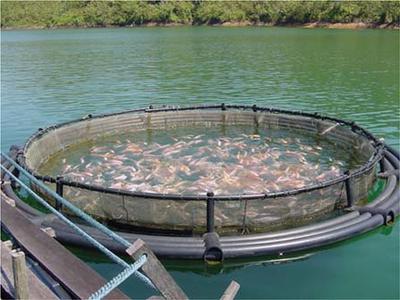 водоём для разведения рыбы