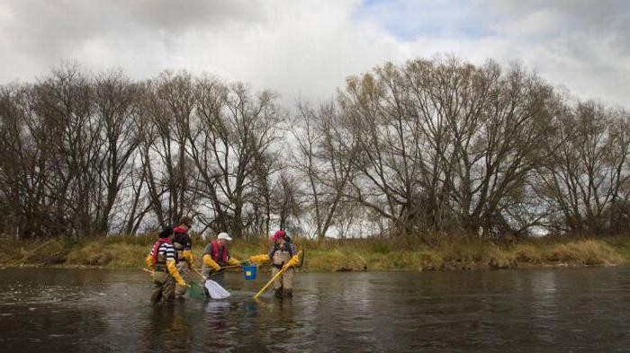 Изображение - Что такое водоохранная зона реки 20533