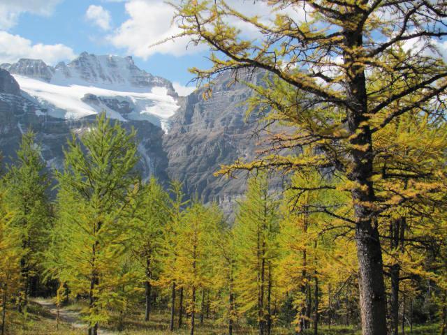 Типы леса: современные принципы класификации