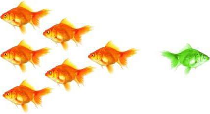 Средство индивидуализации: понятие, виды