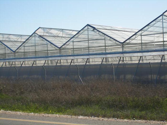 Выращивание клубники в промышленных масштабах