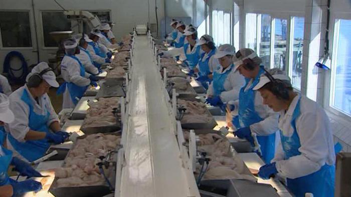 Рыбное производство: технологии, оборудование. Рыбный завод