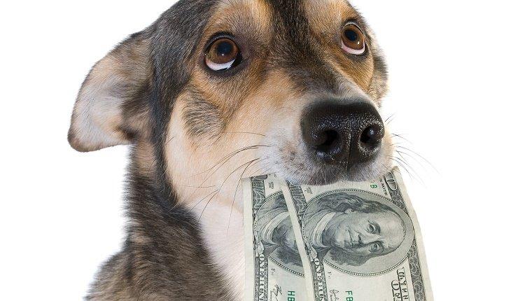 Налог на домашних животных в России