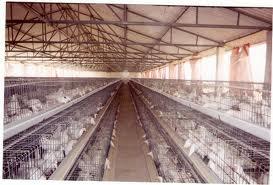Бизнес идея: Птицеводство как бизнес