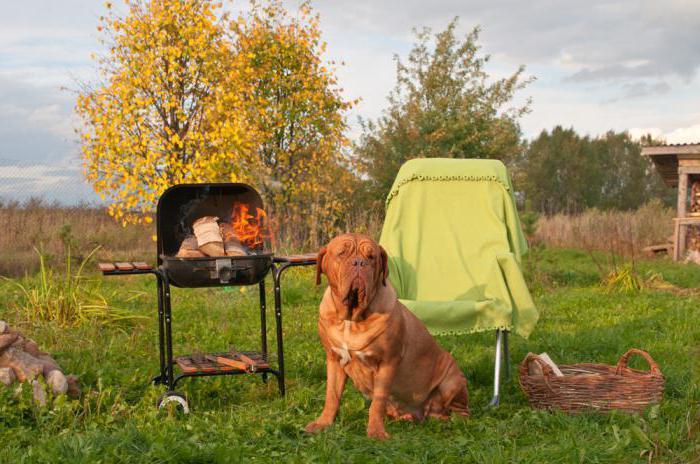 Можно ли во дворе жарить шашлык при соблюдении правил пожарной безопасности?