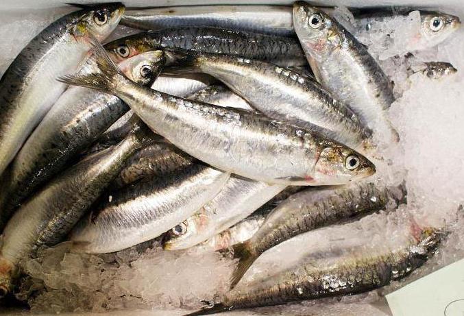 Лучшие рыбные рынки в Москве: обзор, описание, адреса и отзывы