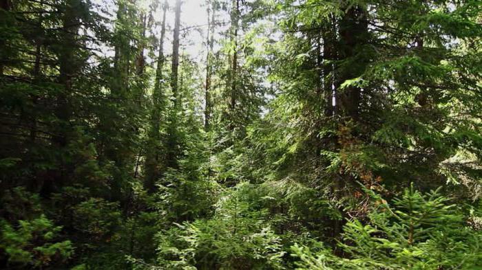 Какие бывают виды лесов