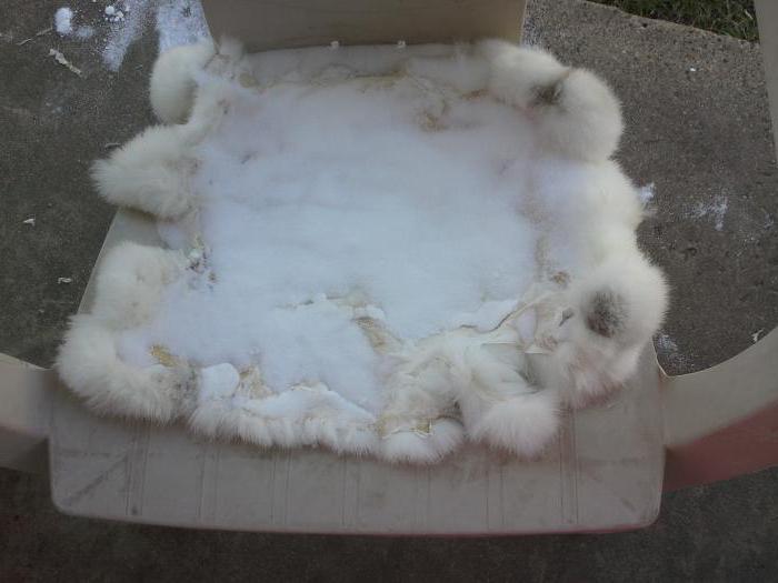 Как выделывать шкурки кроликов в домашних условиях? Описание технологии