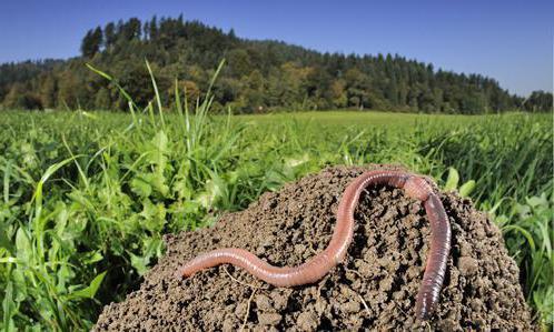 С чего начать разведение червей как бизнес
