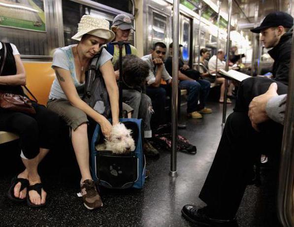 Правила пользования метрополитеном. Инструкция для пассажиров метро