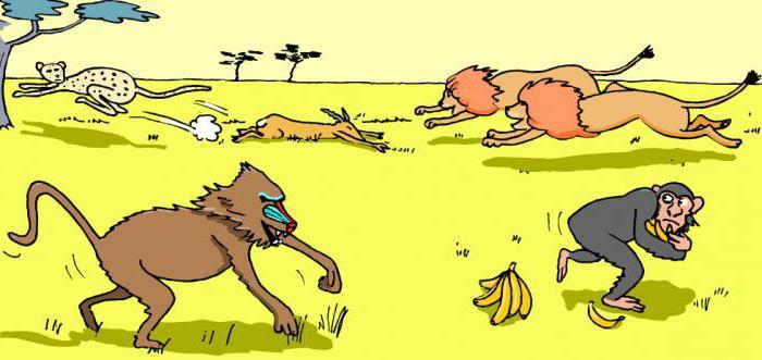 Самые яркие примеры конкуренции в природе