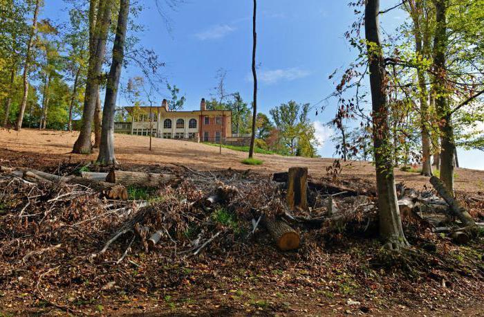 штраф за вырубку деревьев в лесу