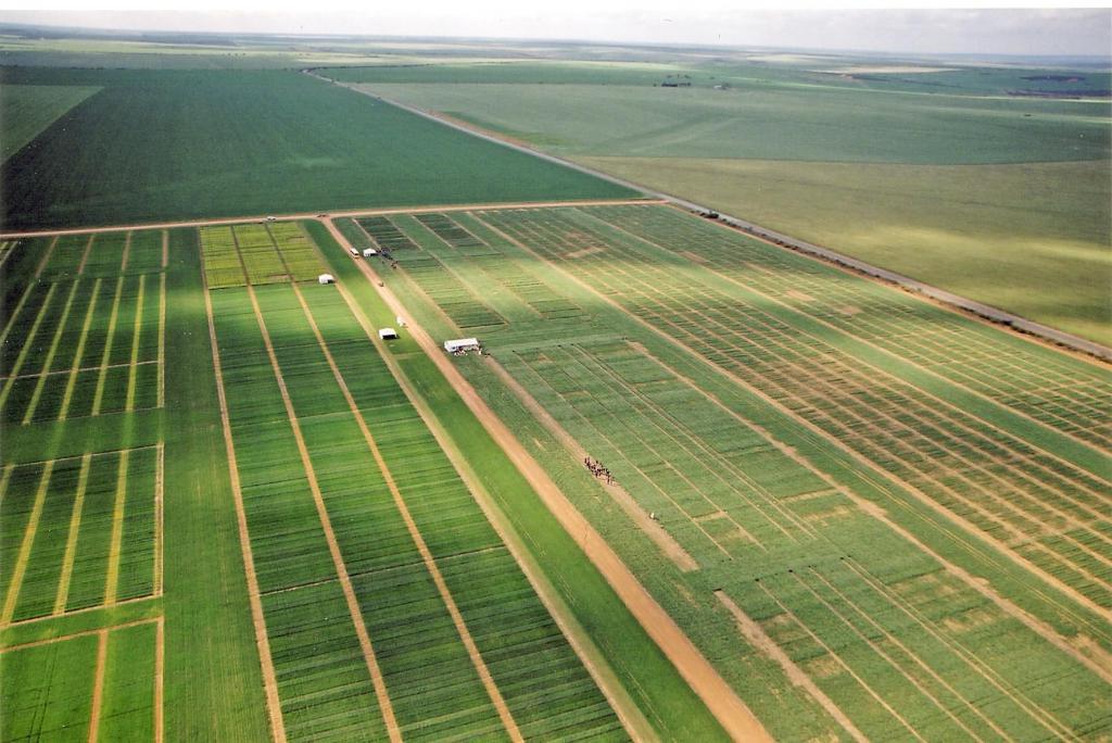 площадь сельскохозяйственных угодий