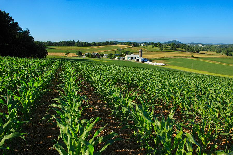 использования сельскохозяйственных угодий
