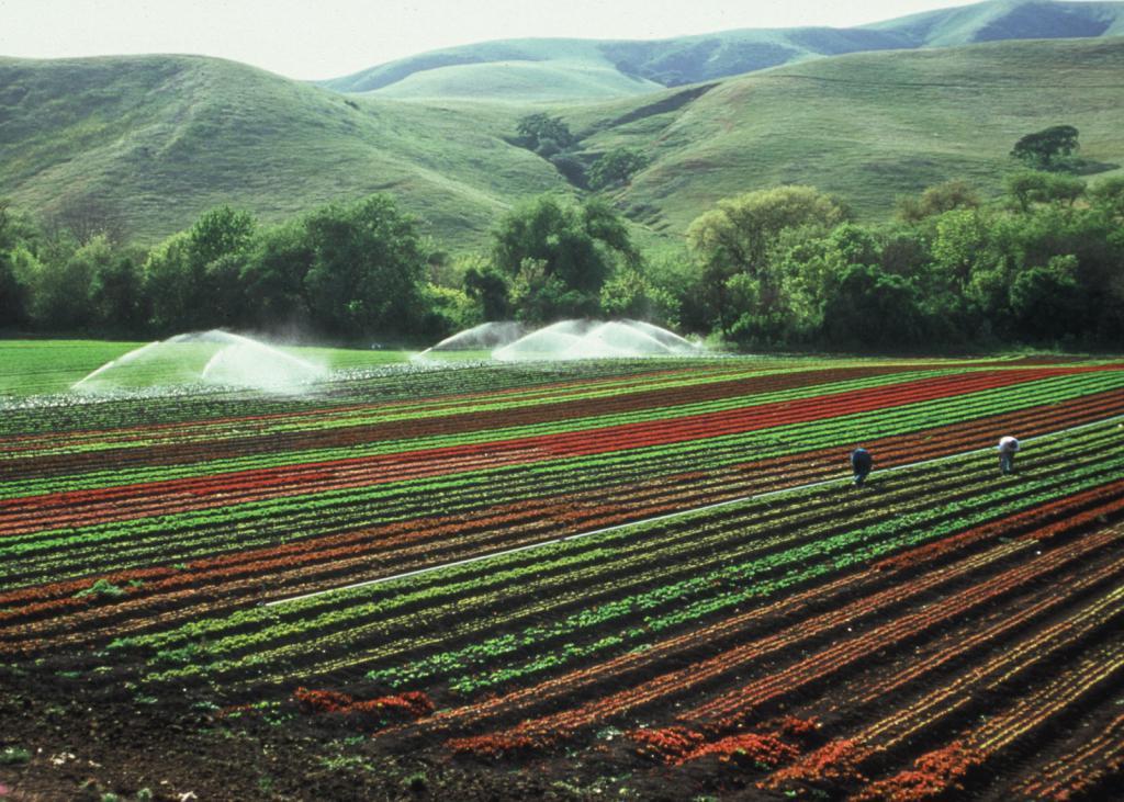 структура сельскохозяйственных угодий