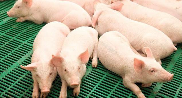 Синтетический и аналитический учет животных на выращивании и откорме