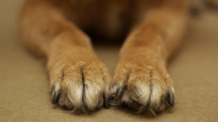 Правила содержания домашних животных