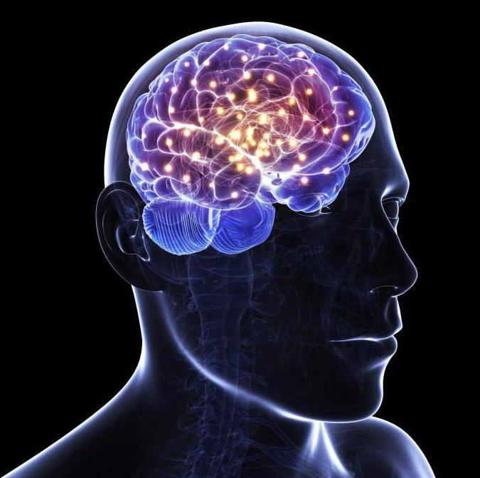 Как развивать мозг: игры, рекомендации и способы
