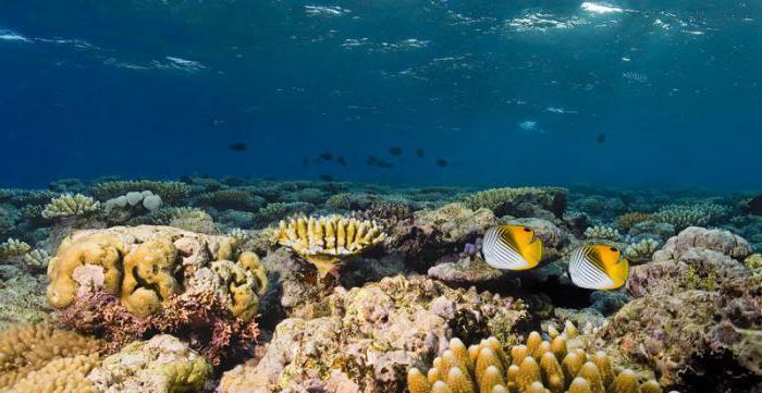 Водные биологические ресурсы мира: описание, перечень и их использование