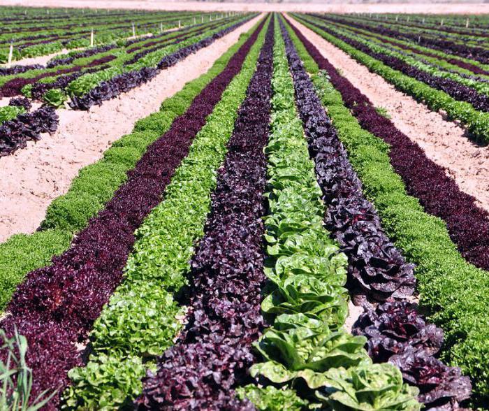 сельское хозяйство оквэд