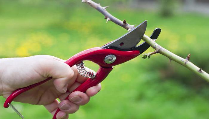 выращивание масличных культур