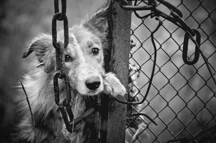 Содержание и отлов безнадзорных животных: правила, требования и особенности