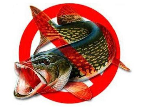 Запрет на ловлю спиннингом: время, штрафы