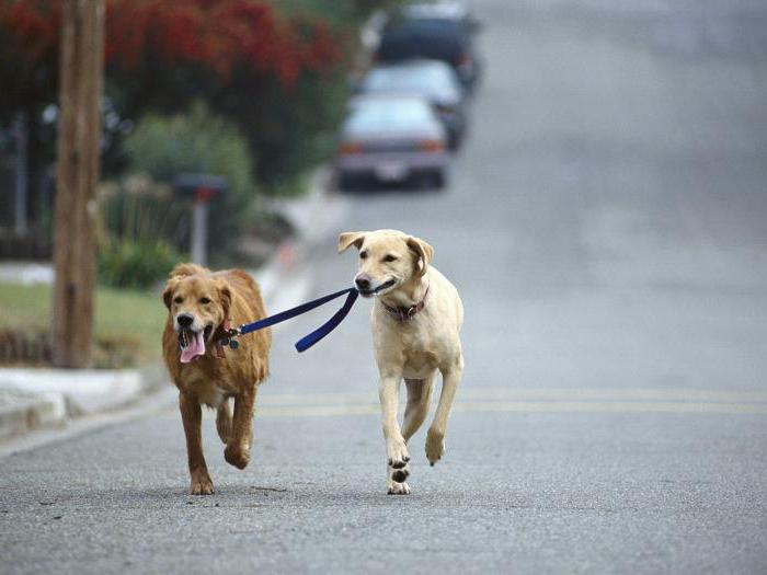Где можно выгуливать собаку по закону
