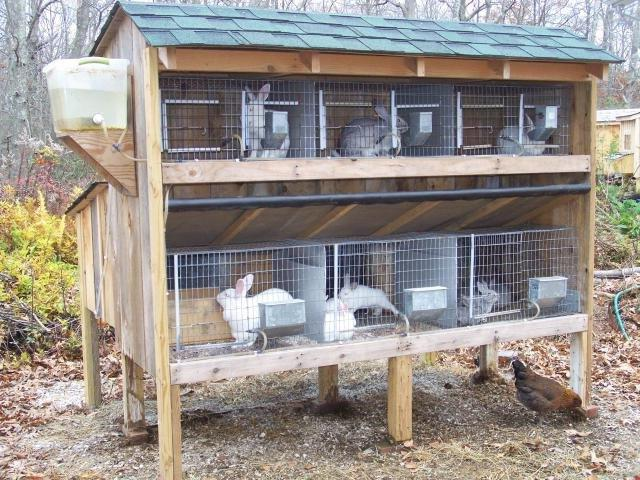 Калифорнийские кролики разведение в домашних условиях