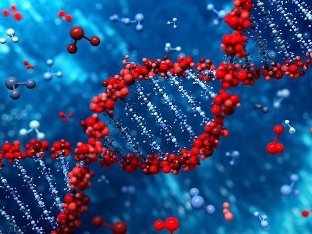 Картинки по запросу Открыта уникальность ДНК — «генетические отпечатки»