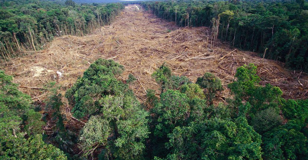 Вырубка лесов в россии доклад 2633