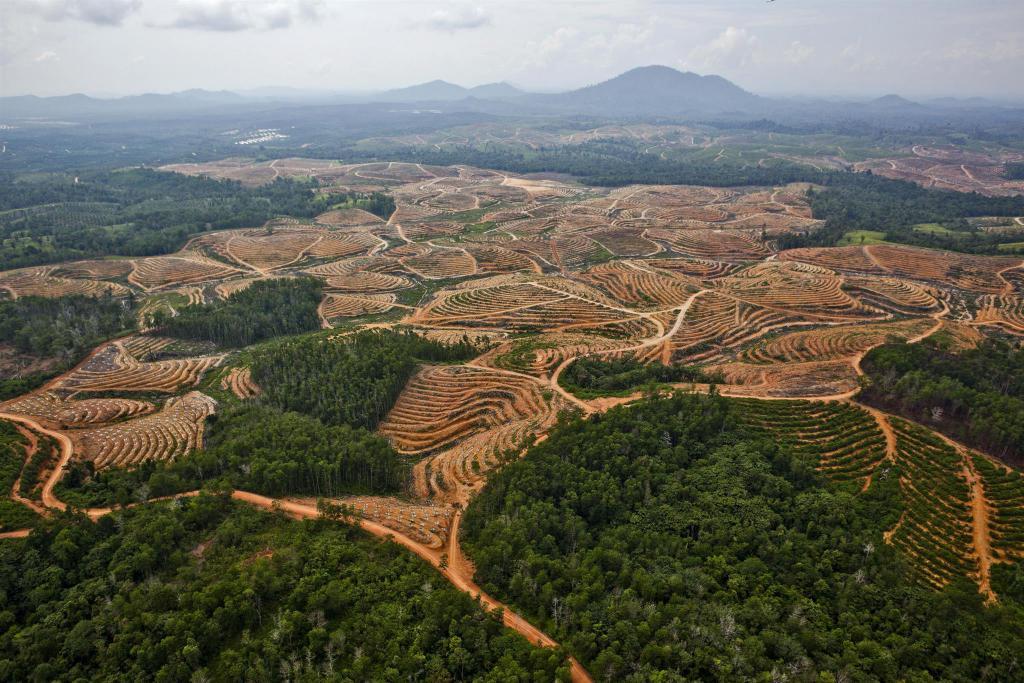 Доклад на тему вырубка лесов в россии 8577