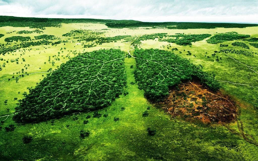 Вырубка лесов в России: пути решения проблемы