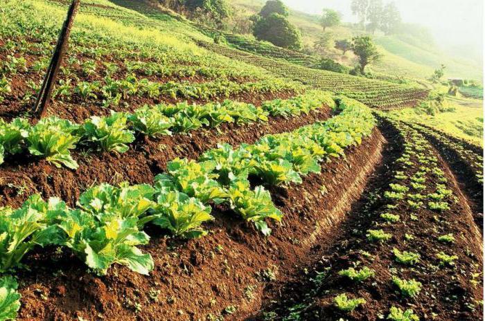 условия получения гранта на сельское хозяйство