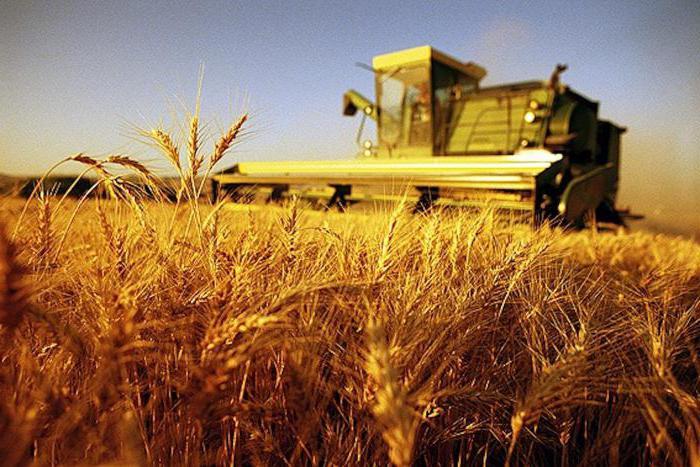получение гранта на развитие сельского хозяйства начинающему фермеру