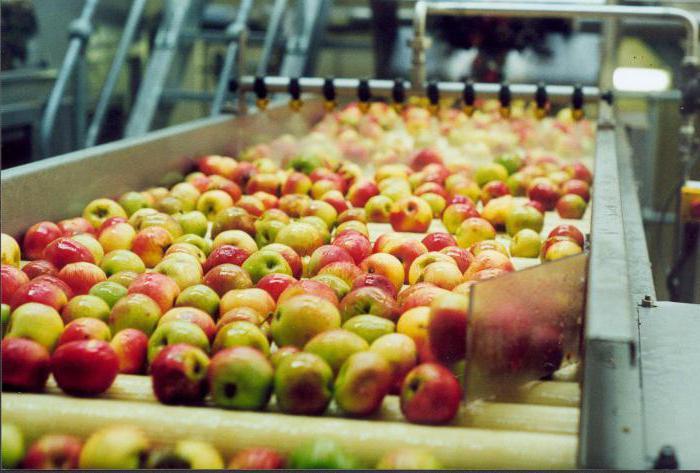 Свой бизнес: производство сидра. Как выбрать оборудование для производства сидра?